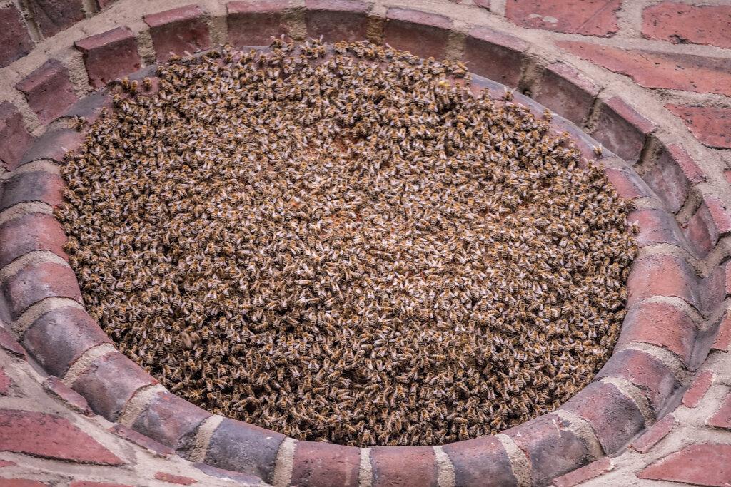 Bienen an St. Suitbertus