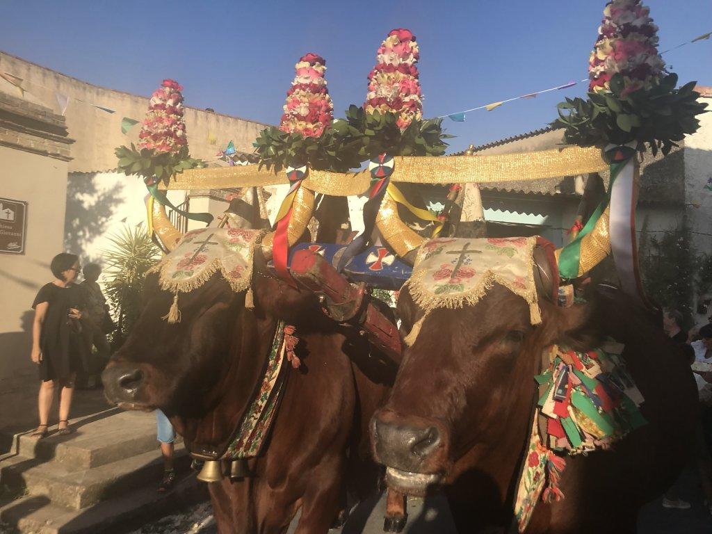Sagra delle Pesche, traditionell mit einer Prozession. Der heilige San Sperate wird von zwei Ochsen durch die Straßen gezogen.